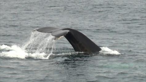 0 ballena.jpg