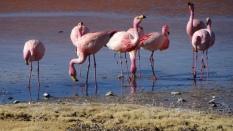 93b laguna colorada