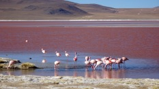 93d laguna colorada
